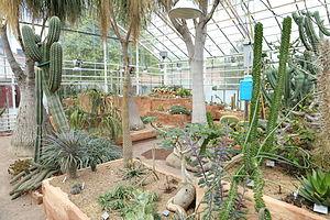 Gothenburg Botanical Garden - Succulents in the greenhouse.