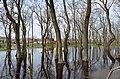 Galeriç Subasar Ormanı - panoramio.jpg