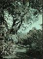 Garden in Madeira, by Sarah Angelina Acland, c.1910 (1).jpg