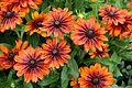 Garden of Flowers (5982172940).jpg