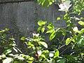 Gardenology.org-IMG 0623 rbgs10dec.jpg