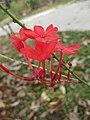 Gardenology.org-IMG 7295 qsbg11mar.jpg