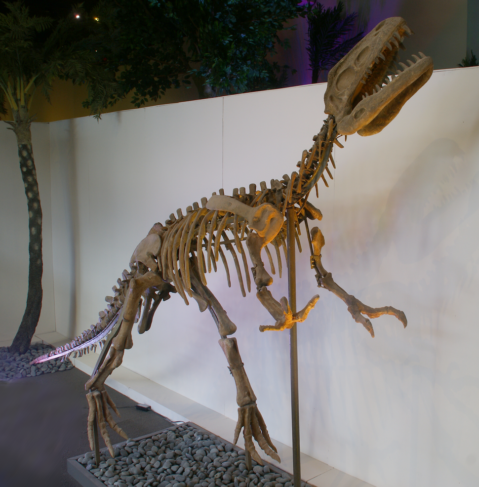 Gasosaurus fossil Bishop Museum