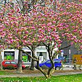 Geneve - panoramio (47).jpg