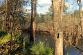 Gfp-florida-big-shaols-state-park-suwanee-river-and-trees.jpg