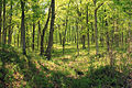 Gfp-missouri-cuivre-river-state-park-forest-hiking-trail.jpg