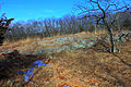 Gfp-missouri-taum-sauk-mountain-state-park-winter-forest.jpg