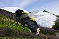 Giant Bee Eden Project.jpg