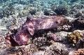 Gigantische Muräne im Roten Meer..DSCF3617ВЕ.jpg