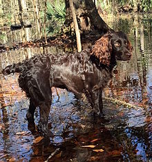 Hunting Dog Shock Collar With Beeper