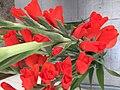 Gladiolus-red-sword-lily.jpg