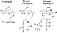 Glycolipide.png