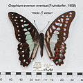 GraphiumEvemonEventusMUpUnAC1.jpg