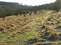 Grassland near Christmas Common - geograph.org.uk - 682228.jpg