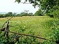 Grassland near Plas Maes-y-groes - geograph.org.uk - 1393607.jpg