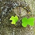 Green - Flickr - Stiller Beobachter (1).jpg
