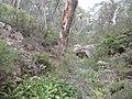 Green Australia.jpg