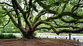 Green Gnarled Tree.jpg