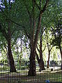 Green Space by Euston Station 3.jpg