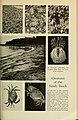 Guide leaflet (1901) (14581791277).jpg