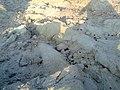 HAYAL MUGHLAN NYS IMAGE - panoramio.jpg