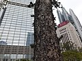 HK 中環 Central 遮打花園 Chater Garden flora green leaves n trees March 2020 SS2 37.jpg