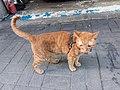 HK 觀塘 Kwun Tong 偉業街 Wai Yip Street brown cat evening June 2019 SSG 06.jpg