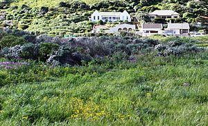 Hangklip Sand Fynbos - Surviving remnant of Hangklip Sand Fynbos at Lower Silvermine River Wetlands, Cape Town.