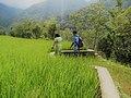 Hapao Rice Terraces(e).jpg