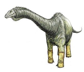 Haplocanthosaurus - Restoration of H. delfsi