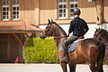 Haras national Avenches - Franches montagnes - 3.jpg