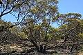 Hattah-Kulkyne National Park (32632541925).jpg
