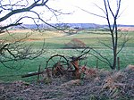 Hedgerow, Gamuerlston Bridge. Old machinery, hay turner?