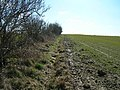 Hedgerow and Field near Risby Grange - geograph.org.uk - 1733508.jpg
