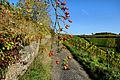 Herbstlicher Spaziergang durch die Becksteiner Weingärten. 15.jpg