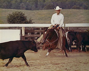 Cutting (sport) - A cutting horse working a cow