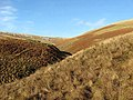 Hill countryside in Ettrick Forest - geograph.org.uk - 656078.jpg