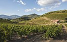 Hills and vineyards, Roquebrun.jpg