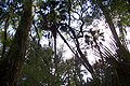 Hillsborough River State Park 11.jpg