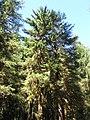 Hoh Rainforest - Olympic National Park - Washington State (9780127536).jpg