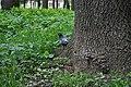 Holub-Staryi-park-15056638.jpg