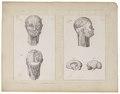 Homo sapiens - 1700-1880 - Print - Iconographia Zoologica - Special Collections University of Amsterdam - UBA01 IZ19600065.tif