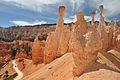 Hoodoos in Bryce Canyon.jpg