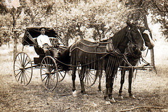 Horse-drawn vehicle - A horse and buggy circa 1910