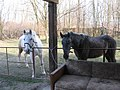 Horse farm - panoramio.jpg