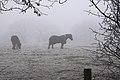 Horses (3153894538).jpg