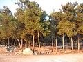 Horshim wood052.jpg