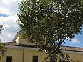 Hospital de la Venerable Orden Tercera (Madrid) 20140923 0003.JPG