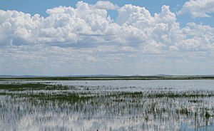 Hulun Lake - Panorama of lake with reed beds.