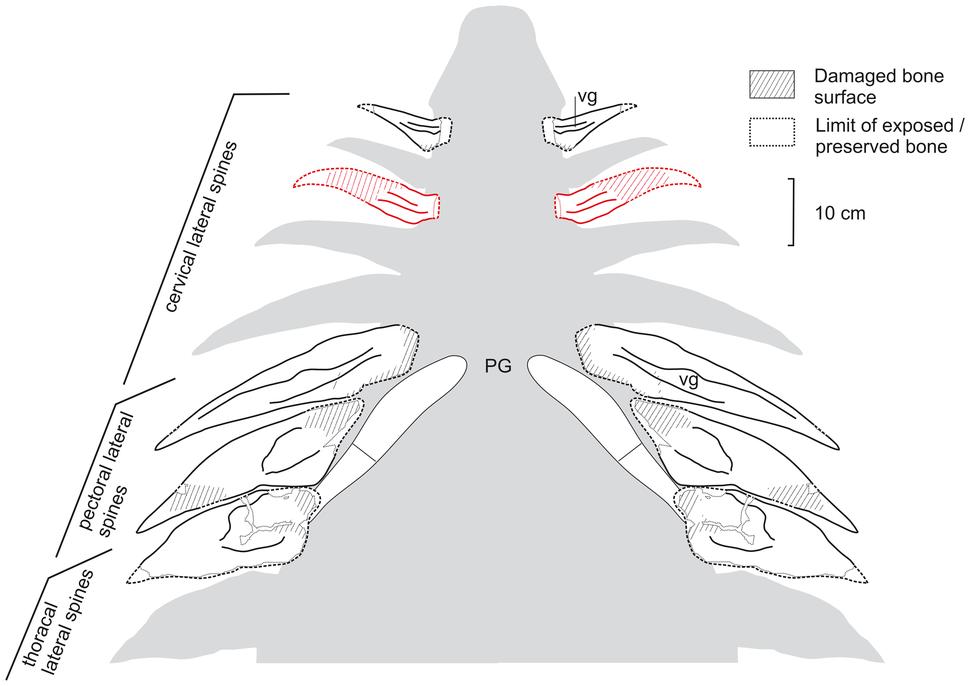 Hylaeosaurus spikes